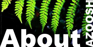 About Azoosh.com website page heading green tree fern plant white typeface font banner black background photo