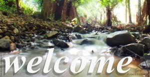 Welcome message meme Sherbrooke Forest creek running water rocks ferns photo AntonK Azoosh.com